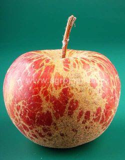 Padlí jabloňové postřik