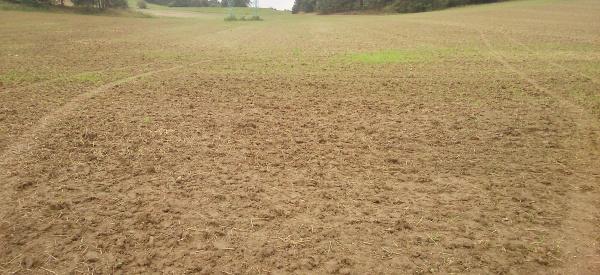 Vzcházející porost řepky na vedlejším poli - půda zpracována dlátovým pluhem Terraland do hloubky 20 cm