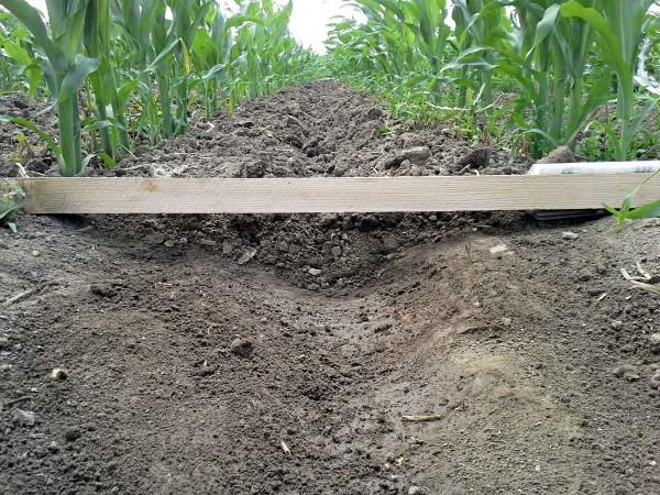 Obr. 5: Profil zpracované půdy meziřádkovou kultivací