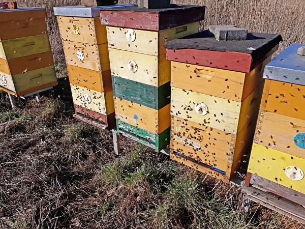 Obr. 1: Jarní prolet včel signalizuje příchod nové vegetační sezóny