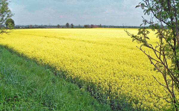 Obr. 3: Zemědělská krajina není nepřítelem včel
