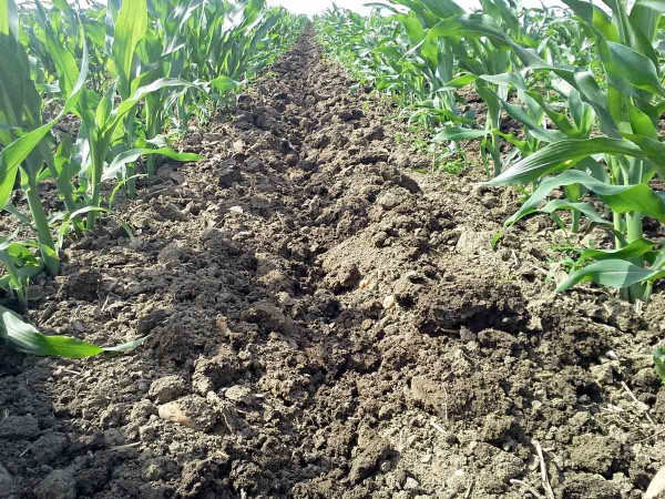 Obr. 2: Kultivace porostu kukuřice sfunkcí protierozní ochrany půdy vytvářením zasakovacího žlábku vmeziřádcích pomocí nové koncepce kypřičů snezávisle nastavitelnými pracovními orgány (lokalita Křičeň, těžká půda, 30. 5. 2017)
