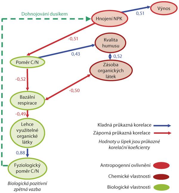 Schéma: Pozitivní zpětnovazebný systém mezi hnojením dusíkem abiologickou aktivitou černozemí (Pokorný akol, 2012)