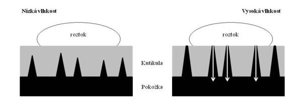 Schéma 3: Diagram účinku vzdušné vlhkosti na kutikulární příjem polárních rozpuštěných roztoků pomocí polárních pórů (Eichert, Fernández 2012)