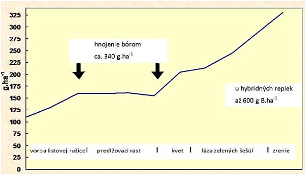 Graf 1: Príjem bóru repkou ozimnou